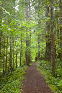 WA, Gifford Pinchot National Forest, Lewis River trail near ... by Danita Delimont