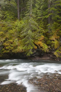 WA, Gifford Pinchot National Forest, Lewis River by Danita Delimont