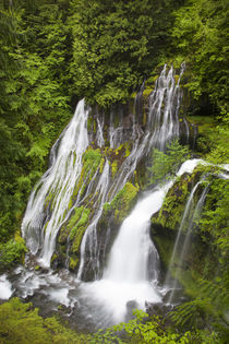 WA, Gifford Pinchot National Forest, Panther Creek Falls, wi... by Danita Delimont