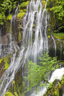 WA, Gifford Pinchot National Forest, Panther Creek Falls, an... by Danita Delimont