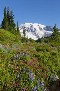 USA, Washington, Mount Rainier National Park, Summer wildflowers. von Danita Delimont