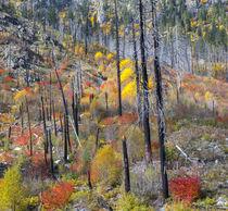USA, Washington, Wenatchee National Forest, Tumwater Canyon,... von Danita Delimont