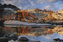 Washington, Magic Meadow with golden larch trees reflected i... von Danita Delimont