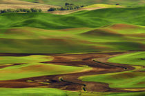 Palouse view from Steptoe Butte of Cultivation Patterns von Danita Delimont
