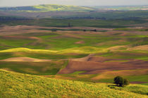 View of Palouse from Steptoe Butte of Cultivation Patterns, ... von Danita Delimont