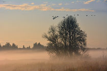 Misty Morning, Ridgefield National Wildlife Refuge, Ridgefie... by Danita Delimont
