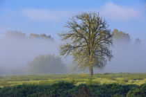Misty Morning, Ridgefield National Wildlife Refuge, Ridgefie... von Danita Delimont