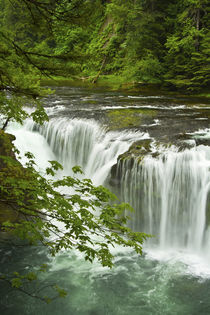 Lower Lewis Falls, Lewis River, Gifford-Pinchot National For... von Danita Delimont