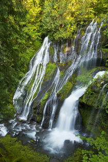 Panther Creek Falls, Gifford-Pinchot National Forest, Carson... by Danita Delimont