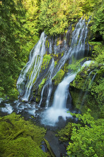 Panther Creek Falls, Carson, Washington, USA by Danita Delimont