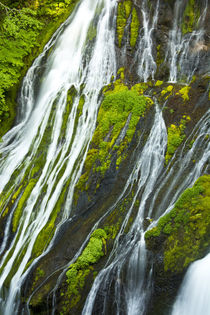 Detail, Panther Creek Falls, Carson, Washington, USA by Danita Delimont