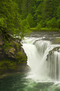 Lower Lewis Falls, Lewis River, Cougar, Washington, USA by Danita Delimont