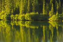 Close up, reflection, Reflection Lake, Mount Rainier Nationa... by Danita Delimont