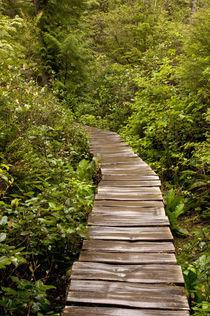 USA, Washington, Neah Bay, Cape Flattery boardwalk by Danita Delimont