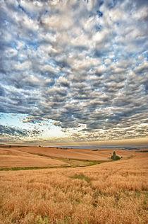 Walla Walla wheatfield von Danita Delimont