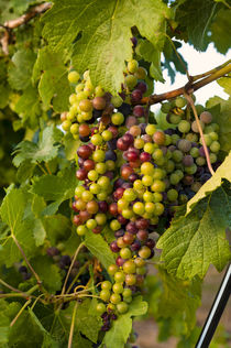 The Okanogan Wine Valley by Danita Delimont