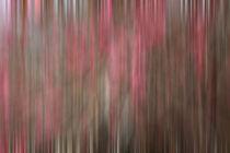 Crabapple Tree blossoms von Danita Delimont