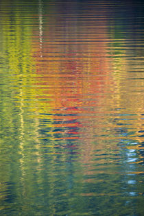 Fall color trees reflected in rippled water von Danita Delimont