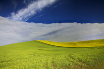USA, Washington State, Palouse by Danita Delimont