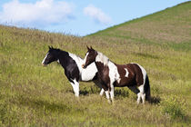 Horses on the hill side by Danita Delimont