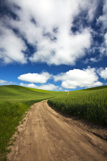Back Country Road Through Spring Wheat Field by Danita Delimont