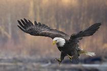 Nooksack River, Washington State, USA von Danita Delimont