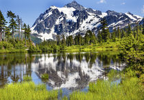 Picture Lake Evergreens Mount Shuksan Washington USA von Danita Delimont