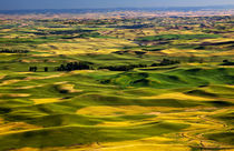 Yellow Green Wheat Fields and Farms from Steptoe Butte Palou... by Danita Delimont