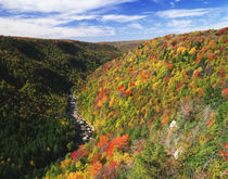 USA, West Virginia, Blackwater Falls State Park, View of Bla... by Danita Delimont