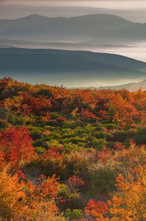 USA, West Virginia, Dolly Sods Wilderness by Danita Delimont