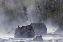Boulders in early morning mist, Gibbon River, Yellowstone Na... by Danita Delimont