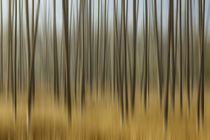 Blurred motion treatment of fallen ghost trees, Yellowstone ... by Danita Delimont