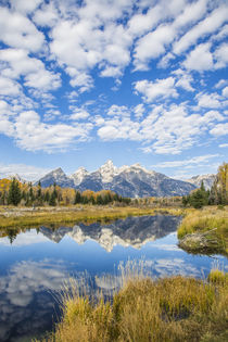 Teton Reflection by Danita Delimont