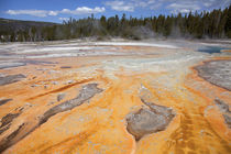Upper Geyser Basin, Yellowstone National Park, Wyoming, USA. von Danita Delimont