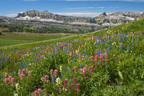 Alaska Basin wildflower meadow, Caribou-Targhee National For... von Danita Delimont