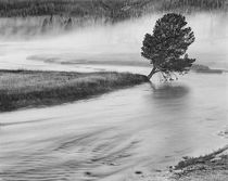 USA, Wyoming, Yellowstone, Firehole River and Tree by Danita Delimont