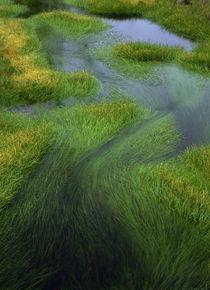 Grasses v 1 L by Danita Delimont