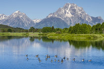 Small lake in Grand Teton National Park, Wyoming, USA. von Danita Delimont