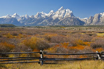 Autumn color, Grand Tetons, buck and rail fence, from Cunnin... by Danita Delimont