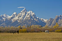 Horses, Moose Head Ranch, autumn, Grand Tetons, Grand Teton ... von Danita Delimont