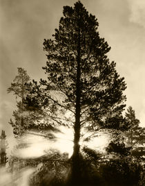 USA, Wyoming, Yellowstone National Park, View of sunbeam through trees by Danita Delimont