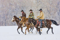 Cowboys and Cowgirls riding snowfall; Model Released by Danita Delimont