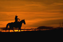 Cowboy riding in the Sunset with lariat Rope; Model Released by Danita Delimont