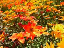 Blumenfeld. von Zarahzeta ®