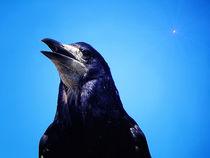 Die Krähe. von Zarahzeta ®