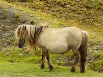 Pony im Black Mountain by gscheffbuch