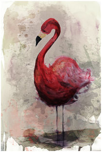 Flamingo by Sabrina Ziegenhorn