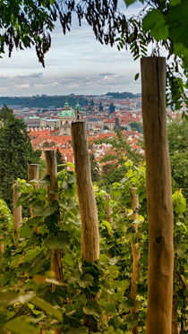 Vineyard, Prague, Czech Republic by Tomas Gregor