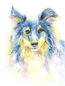 Collie, bunt by Bettina Kröger