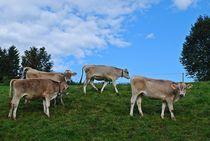 Münchner Jakobsweg: freilaufendes, glückliches Vieh... by loewenherz-artwork